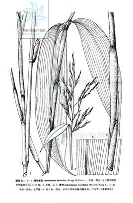 阔叶植物立面图手绘
