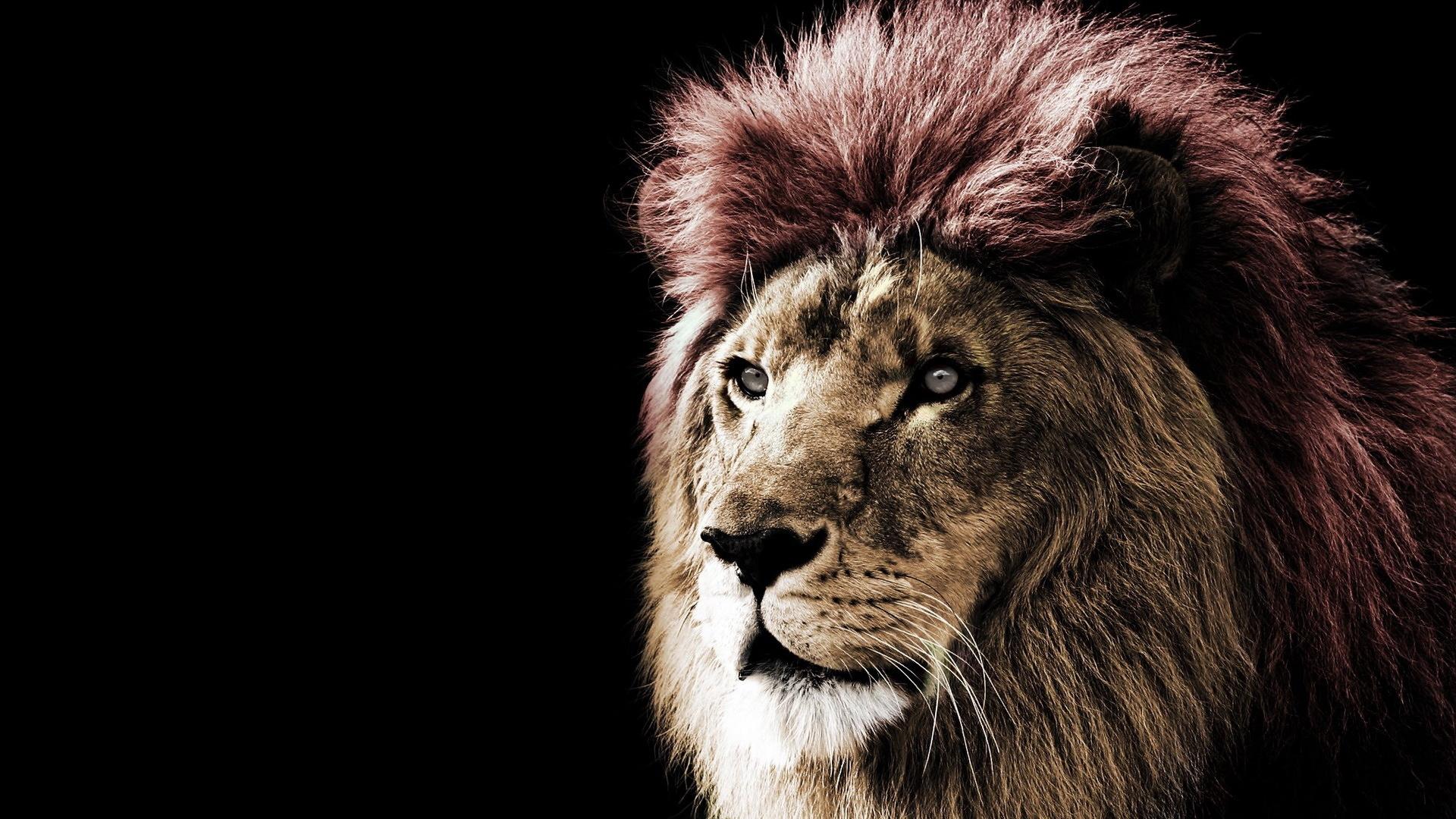狮子雕刻360图片大全