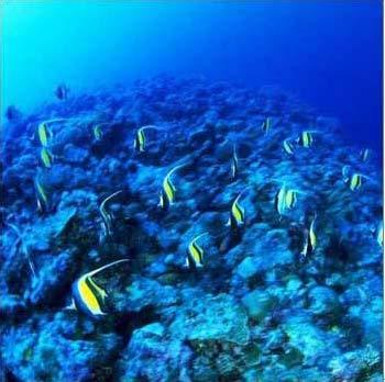 三亚热带海洋动物园