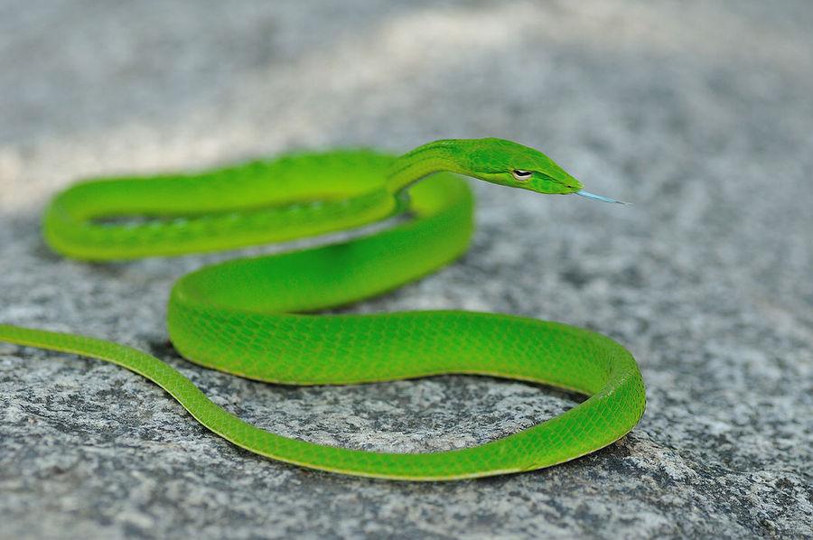 动物 蛇 900_598